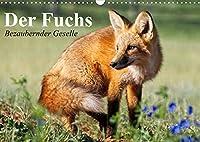 Der Fuchs. Bezaubernder Geselle (Wandkalender 2022 DIN A3 quer): Froehliche Rotfuechse beim vergnuegten Spiel mit Hunden (Monatskalender, 14 Seiten )