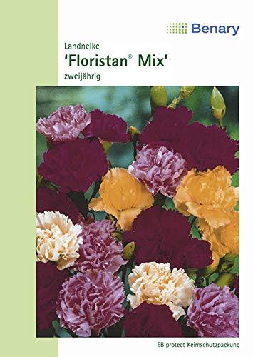 Nelken Landnelke Floristan Mix Höhe 70 cm Samen