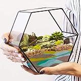Farb-Sand 1000g, Creme ✓ Deko-Sand für Vielseitige Bastelideen ✓ Tolle Tischdeko/Tischdekoration ✓ Zum Befüllen von Glasgefäßen Vasen Teelichthalter ✓ bunter Sand | trendmarkt24-9102102 - 5