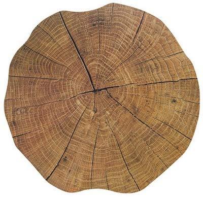 Merz-Design 6 Stück Premium-Platzsets in Holzoptik Ø 35cm rund Tischset Platzset Motiv Baumstamm Baum Scheibe Kunststoff Platzmatte undurchlässig abwaschbar