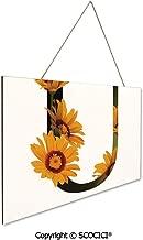 ursinia flower