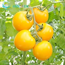 Brand New! Rare Yellow Pearl Tomato Seeds 30pcs/bag Dwarf Tomatoes Cherry Mini Tomato Bonsai Seeds Vegetable for Garden Plant