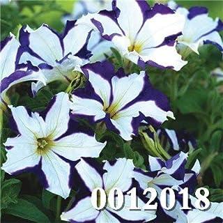 70 Pcs/Bag Petunia Seeds Climbpetunia Flower Multicolor Petunia A Garden Seeds, The Buddrate