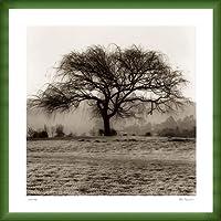 ポスター アラン ブラウステイン Willow Tree 額装品 ウッドベーシックフレーム(グリーン)