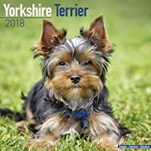 Yorkshire Terrier Calendar - Dog Breed Calendars - 2017 - 2018 wall Calendars - 16 Month by Avonside