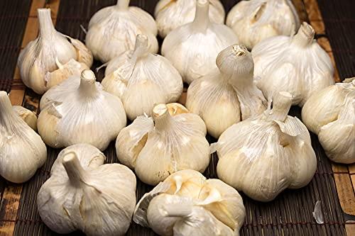 【B品・サイズ混合】有機 乾燥にんにく(福地ホワイト六片種) 2kg 有機JAS (青森県 あおもり南部有機生産組合) ふるさと21
