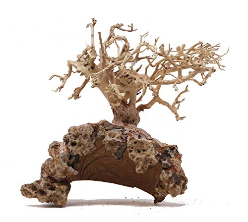 Bonsai Driftwood Aquarium Tree Dry Coconut GD Random Pick (8in H x 10in L) Natural, Handcrafted Fish Tank Decoration | Helps Balance Water pH Levels, Stabilizes Environments | Easy to Install