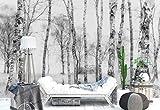 Papel Tapiz Fotomural - Troncos De Los Árboles De Abedul Bosque - Tema Bosques y los árboles - XL - 368cm x 254cm (an. x alto) - 4 Tiras - impreso en papel 130g/m2 EasyInstall - 1X-1211795V8
