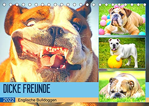 Dicke Freunde. Englische Bulldoggen (Tischkalender 2022 DIN A5 quer)