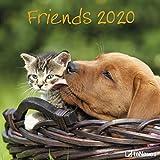 Friends 2020 - Broschürenkalender - Wandkalender - Fotokalender - 30x30cm - Tierkalender