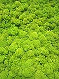 eternaflor Musgo preservado Verde Lima. Paquete 500 Gramos. Color Verde Lima. Liquen preservado Verde Lima.