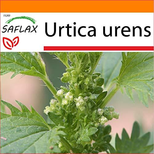 SAFLAX - Garden in the Bag - Heilpflanzen - Brennessel - 150 Samen - Mit Anzuchtsubstrat im praktischen, selbst aufstellenden Beutel - Urtica urens