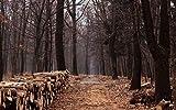 Descompresión Para Adultos 1000 Piezas Camino Sendero Sendero Árboles Bosque Madera Madera Bosque Ensamblaje De Madera Decoración Para El Hogar Juego De Juguetes Juguete Educativo Para Niños Y Adulto