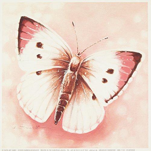 Eurographics AWA1125 wysokiej jakości druk artystyczny, Arkadiusz Warminski, Lycaenidae 18 x 18 cm