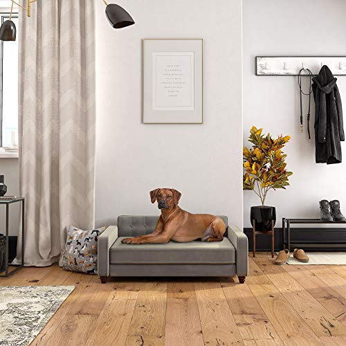 dog beds at ollies
