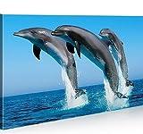 islandburner Bild Bilder auf Leinwand Delphine Delfin 1p