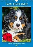 Familienplaner Berner Sennenhund Welpen (Wandkalender 2021 DIN A4 hoch)
