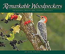 Remarkable Woodpeckers: Incredible Images and Characteristics (Wildlife Appreciation)