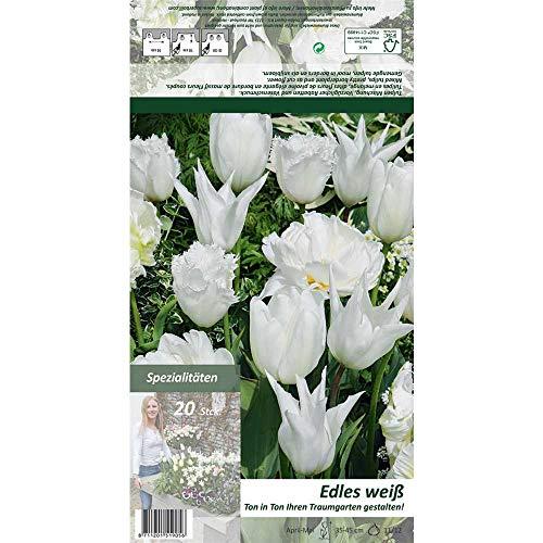 Florado 20x Tulpe Blumenzwiebeln 'Ton in Ton – Edles Weiß', Zwiebelblumen, Garten, Blumen Schnittblumen, Bienen Insekten, Größe 11/12