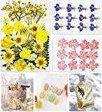 55 PCS Dried Flowers for Resin - Real Pressed Flowers for Crafts - Dried Flowers Nail Art - Resin Flowers for Candles Making DIY Papermaking Jewelry Bookmark Art Floral Decors Making