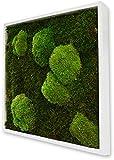 Tableau végétal mousse stabilisé BASIC - Carré 35x35 - NATURALYS Attention , verifier le produit à la livraison