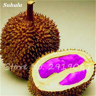10 Pcs Durian Seeds délicieux roi de fruits sains Tropical Giant Trees Jardin Plantes Bonsaï Non-GMO Haute Nutrition 2