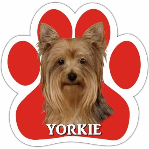 Yorkie Car Magnet With Unique Paw Shaped Design Measures 5.2 by 5.2 Inches Covered In UV Gloss For Weather Protection E/&S Imports 13125-46