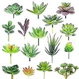 XONOR Plantas suculentas Artificiales Surtidas suculentas Falsas Tallos de imitación Floral para el Paisaje de Loto decoración del jardín del hogar (16 Piezas)