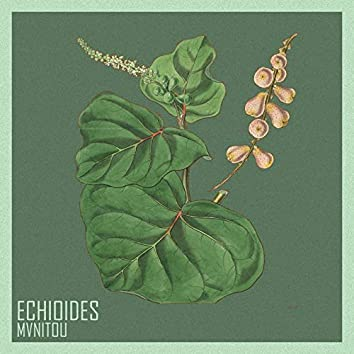 Echioides