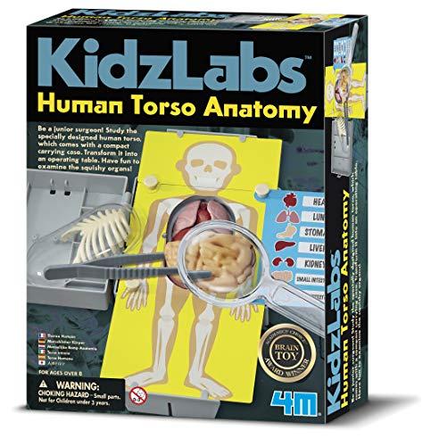 4M- Human Torso Anatomy Ciencia, Multicolor (00-03373)
