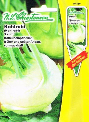 Kohlrabi Lanro weiß, kälteunempfindlich, früher und später Anbau, schmackhaft, ( mit Stecketikett)