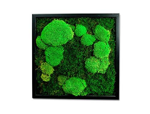 Moosbild Pflanzenbild mit Falchmoos und Kugelmoos versch. Maße günstig