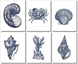 Beach Wall Decor Art Prints (Set of 6) - Vintage Seashells - 8x10 - Unframed - Blue