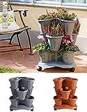 Bama Spa Säulentopf Set stapelbar 3 Ebenen Pflanz Blumen Kräuter Topf Etagere 3er Roller Grau