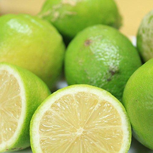 【訳あり】/国産レモン 約10kg/愛媛県産(れもん)【ワックス・防腐剤不使用】