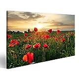Bild Bilder auf Leinwand Mohnblumen Feldblume bei