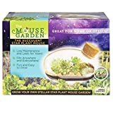 Grow Your Own Succulent Star Plant Mouse with Our Glass Terrarium Kit - Fun and Easy to Grow - Plant A Mouse Garden That Will Last for Years - Great for Home Or Office