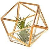 MyGift Glass Faceted Succulent Terrarium with Brass-Tone Metal Frame