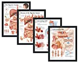 """Set of 4 Framed Medical Posters The Digestive System, Diseases of the Digestive System, Understanding GERD, and Understanding IBS 22""""x28"""" Wall Diagrams"""