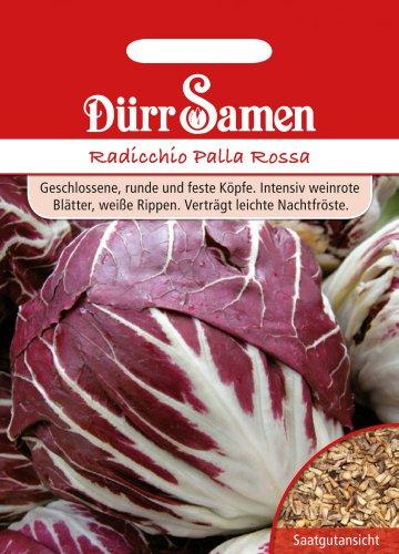 Dürr Samen 0502 Radicchio Palla Rossa (Radicchiosamen)