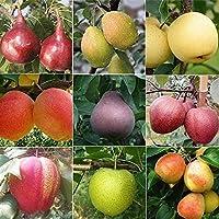 YZztssj 100個梨の種混合梨の品種さまざまな色エレガントな香り家宝落葉果樹一年中植えられた果物の種秋に収穫された