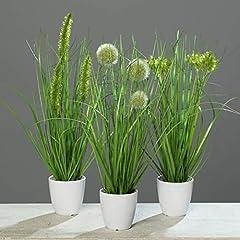 Gras im weißen Topf