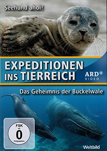 Expeditionen ins Tierreich - 2 Folgen - Seehund ahoi ! + Das Geheimnis der Buckelwale