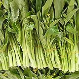 Granos végétales1000Pcs/ Bag Seeds Fresh Non-OGM Green Prolific Pak Choi Seeds for Yard - Pak Choi Seeds
