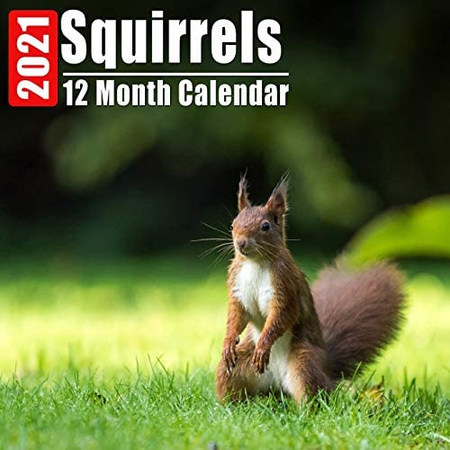 Calendar 2021 Squirrels Cute Squirrel Photos Monthly Mini Calendar With Inspirational Quotes product image