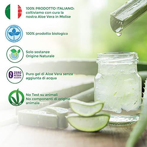 Shampoo Bio per Uso Frequente con Aloe Vera Biologica da 250 ml
