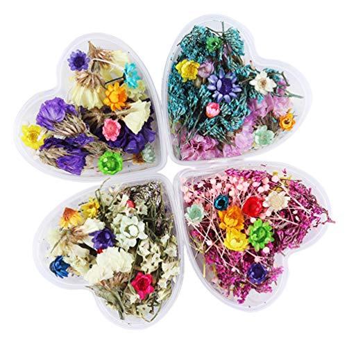 Pixnor 4 Boîte de Fleurs Séchées Petites 3D Vraies Fleurs à Ongles Coloré Fleurs Mélangées Séchées pour Nail Art Et Artisanat