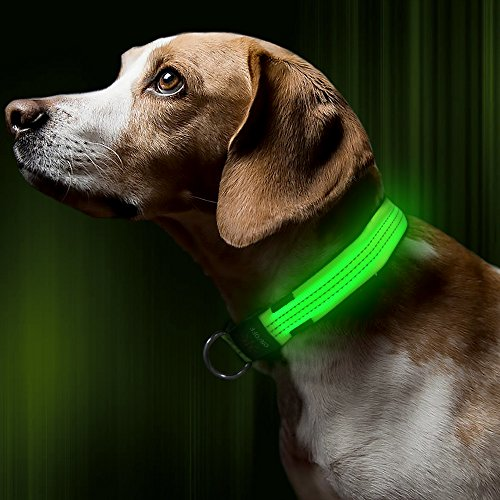 BSEEN LED Dog Collar Nylon Webbing USB Rechargeable with 3 Reflective Strings Glowing Pet Safety Collars with Adjustable Buckle & D-Ring for Small Medium Large Dogs (Large, Neon Green)
