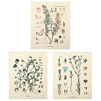 3Pcs Flower Tapestry Wall Hanging - Lourny Wildflower Plant Floral Tapestry Identification Reference Chart Small Tapestry for Bedroom Living Room(Tapestry B 20 x 24 inches)