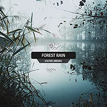 Forest Rain & Nature Ambiance